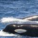 whalewatching-ausflug-andalusien-sancti-petri-cadizWhale Watching Tour Tarifa Ausflug